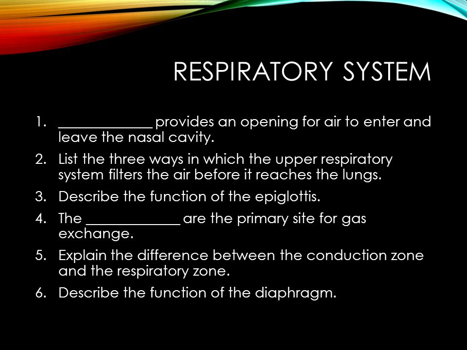 Respiratory System _____________ provides an opening for air to enter and leave the nasal cavity.