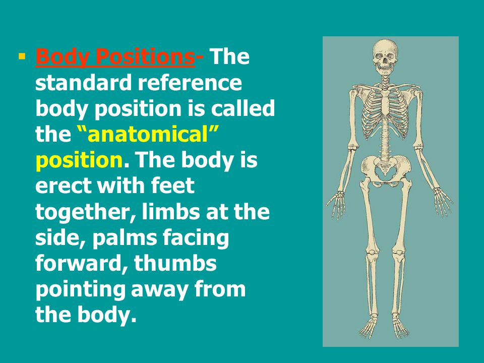 Body Positions- The standard reference body position is called the anatomical position.
