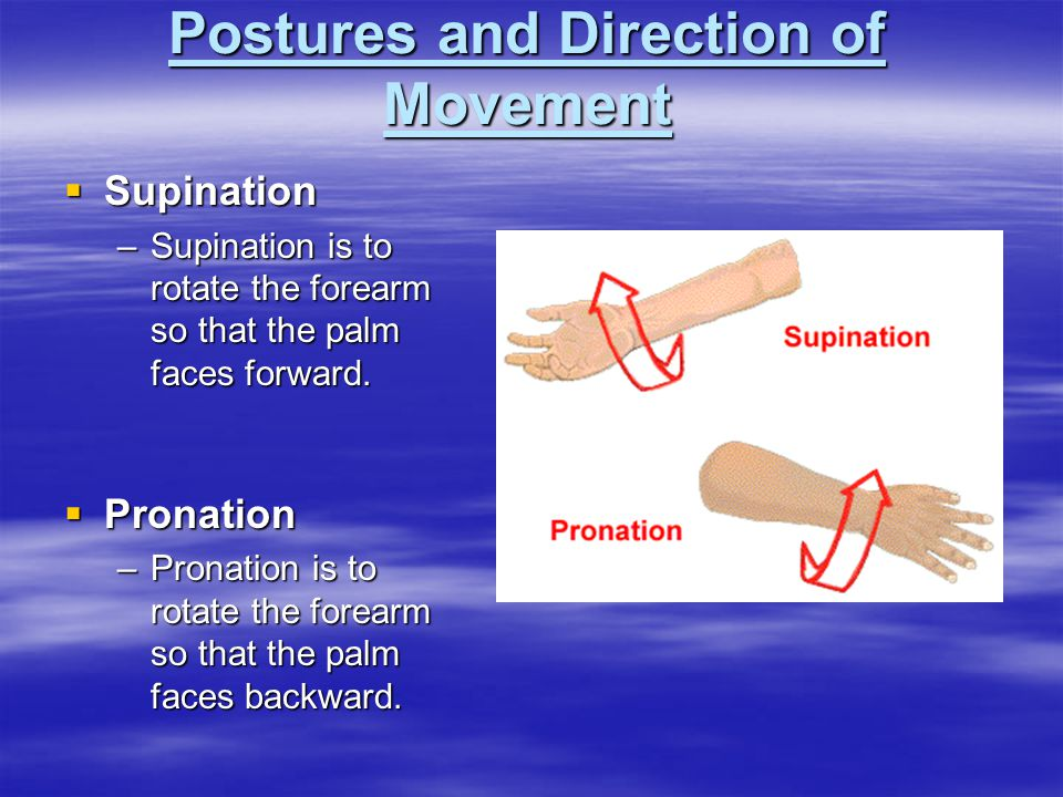 Postures and Direction of Movement