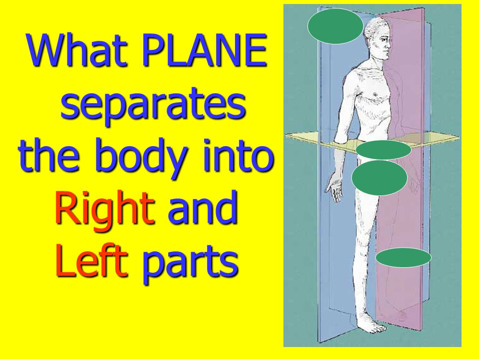 What PLANE separates the body into Right and Left parts