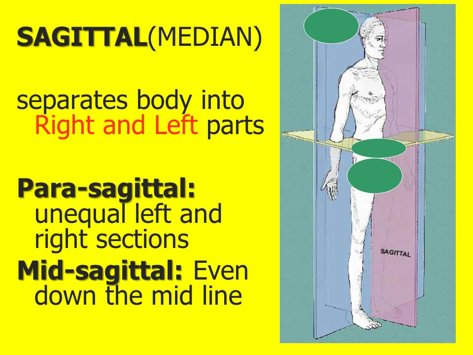 SAGITTAL(MEDIAN) separates body into Right and Left parts. Para-sagittal: unequal left and right sections.