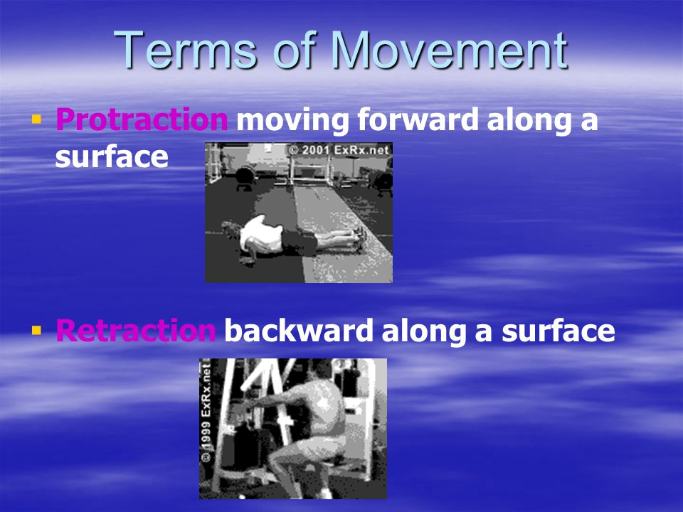 Terms of Movement Protraction moving forward along a surface
