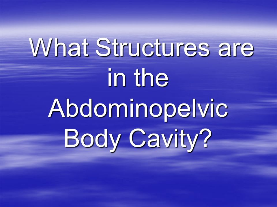 What Structures are in the Abdominopelvic Body Cavity