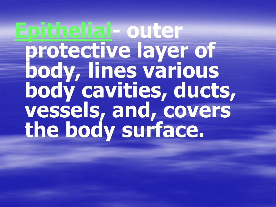 Epithelial- outer protective layer of body, lines various body cavities, ducts, vessels, and, covers the body surface.