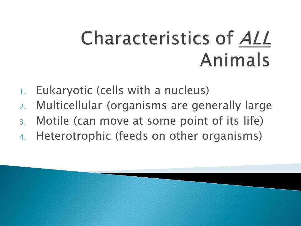 Characteristics of ALL Animals