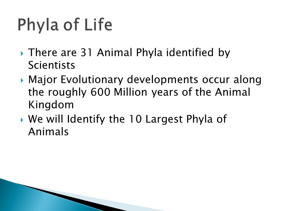 Phyla of Life There are 31 Animal Phyla identified by Scientists