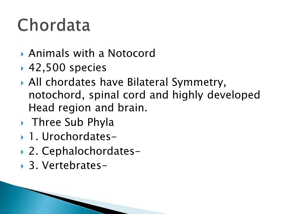Chordata Animals with a Notocord 42,500 species