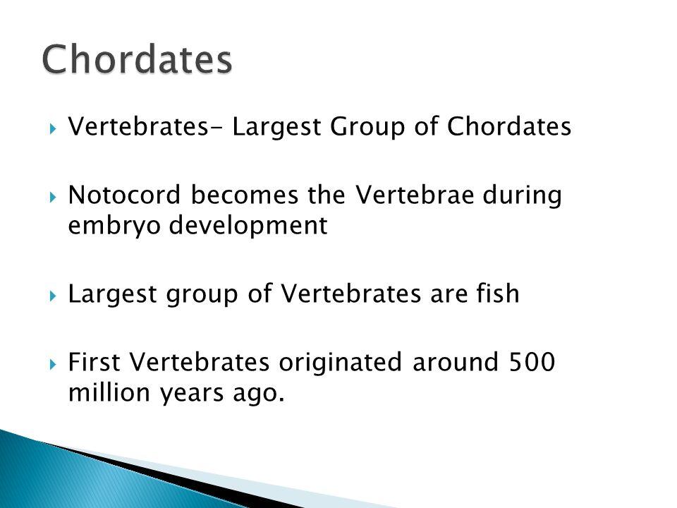 Chordates Vertebrates- Largest Group of Chordates