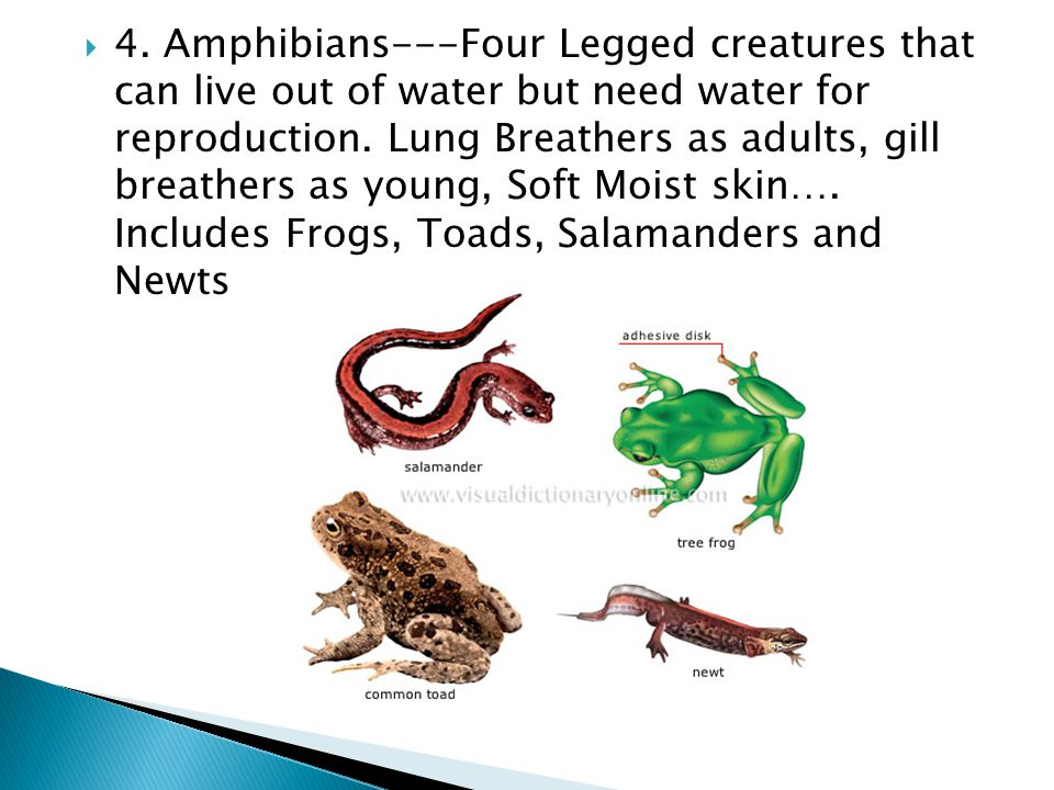 4. Amphibians---Four Legged creatures that can live out of water but need water for reproduction.