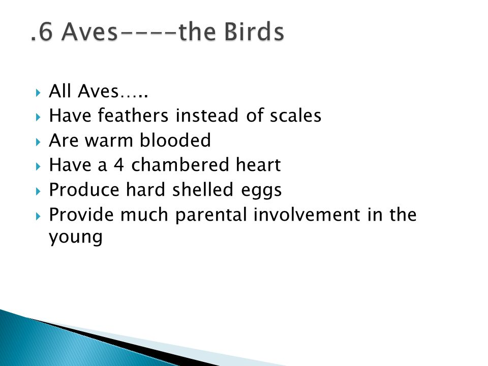 .6 Aves----the Birds All Aves….. Have feathers instead of scales