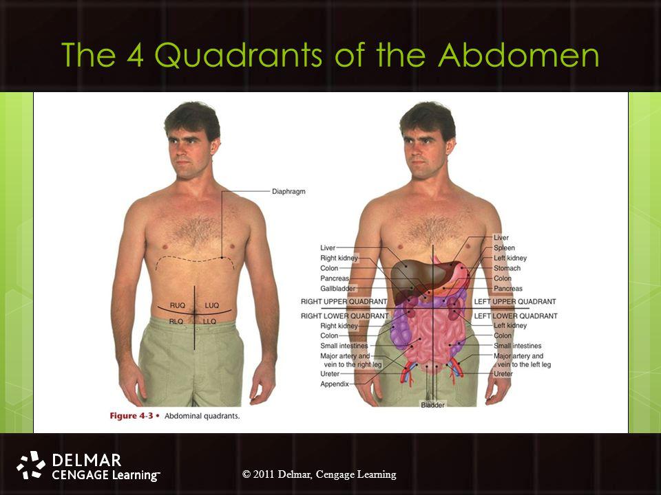 The 4 Quadrants of the Abdomen