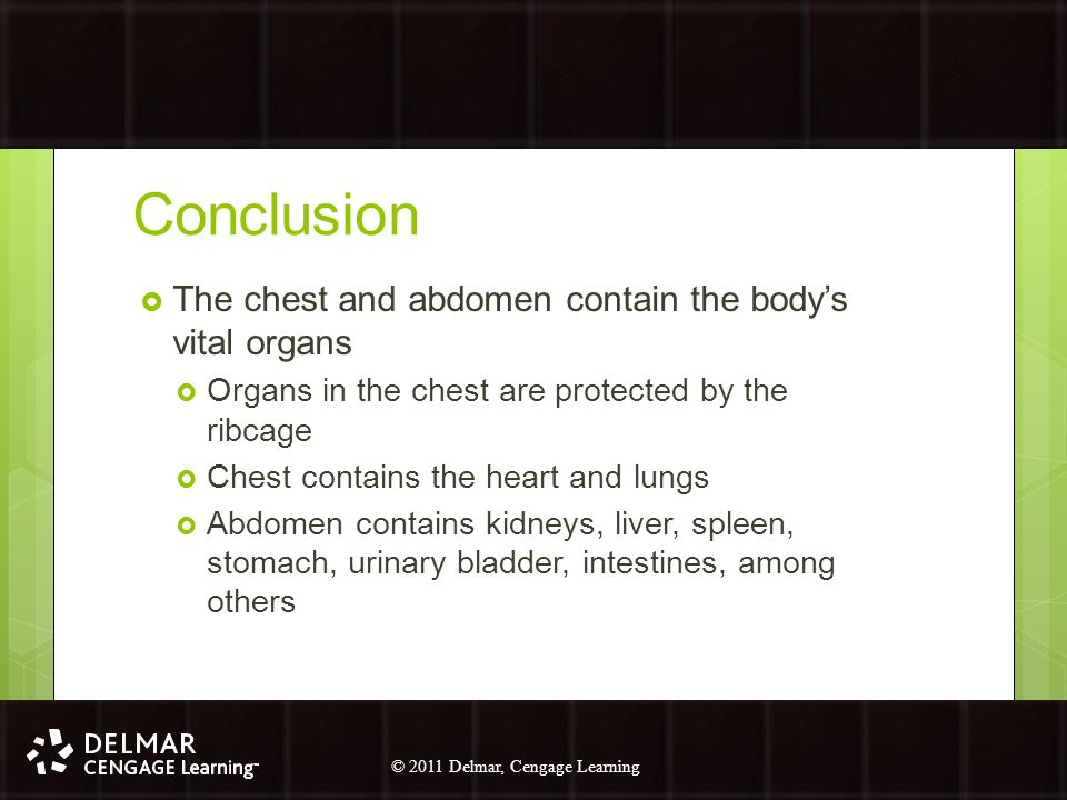 Conclusion The chest and abdomen contain the body's vital organs