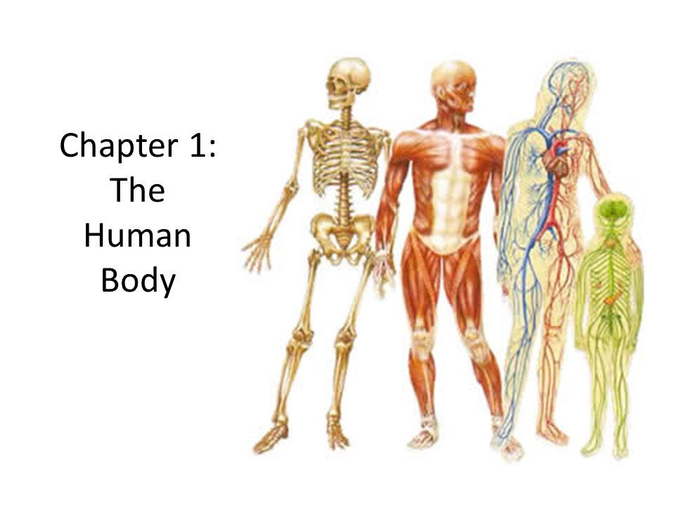 Chapter 1: The Human Body