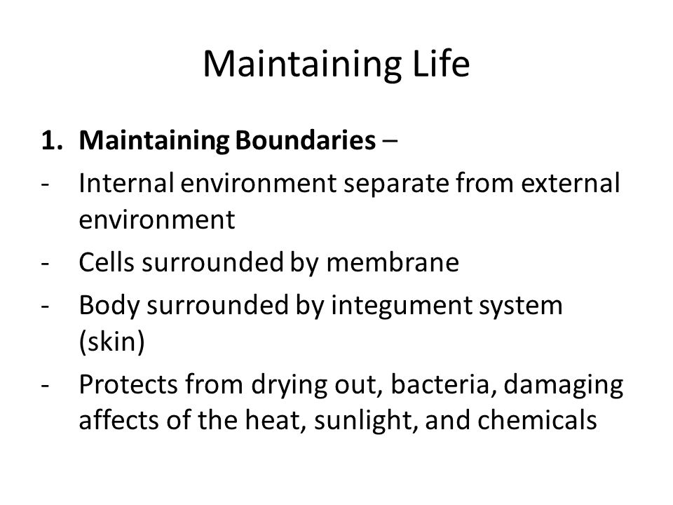 Maintaining Life Maintaining Boundaries –