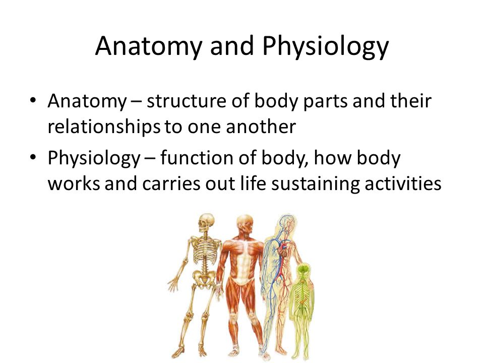 anatomy and physicology chapter 1