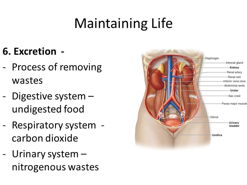 Maintaining Life 6. Excretion - Process of removing wastes