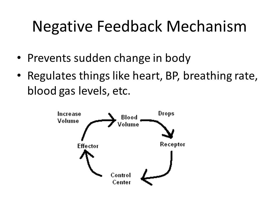 Negative Feedback Mechanism