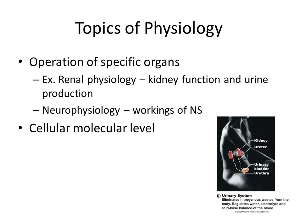 Topics of Physiology Operation of specific organs