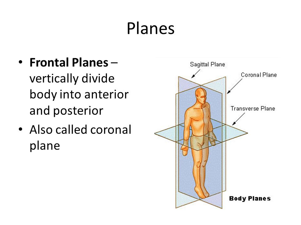 Planes Frontal Planes – vertically divide body into anterior and posterior.