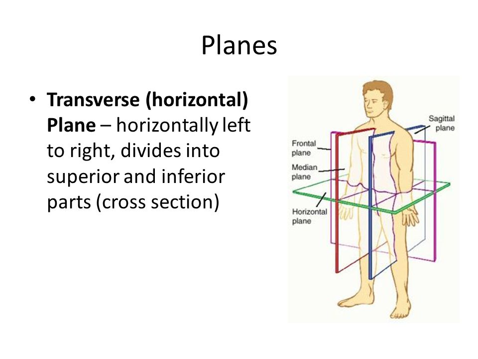 Planes Transverse (horizontal) Plane – horizontally left to right, divides into superior and inferior parts (cross section)