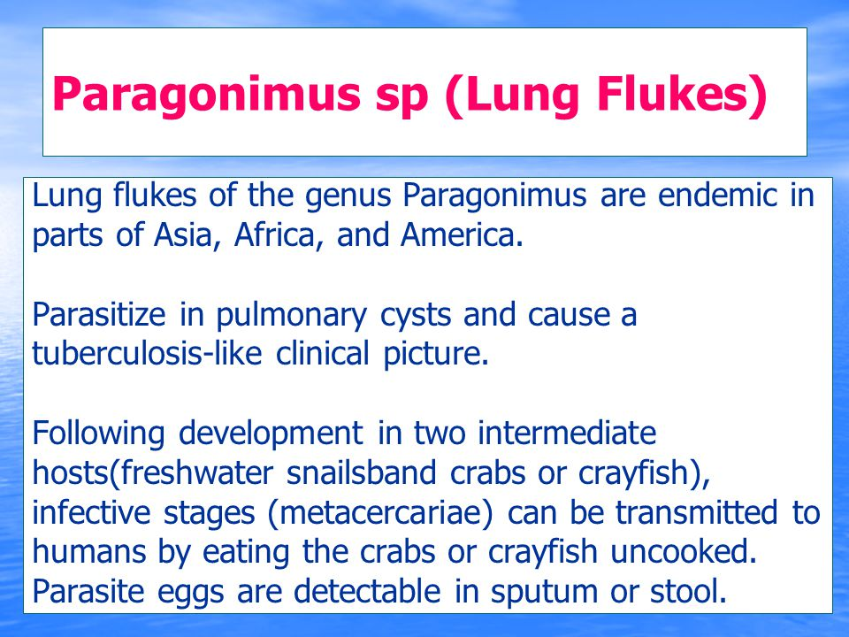 Paragonimus sp (Lung Flukes)