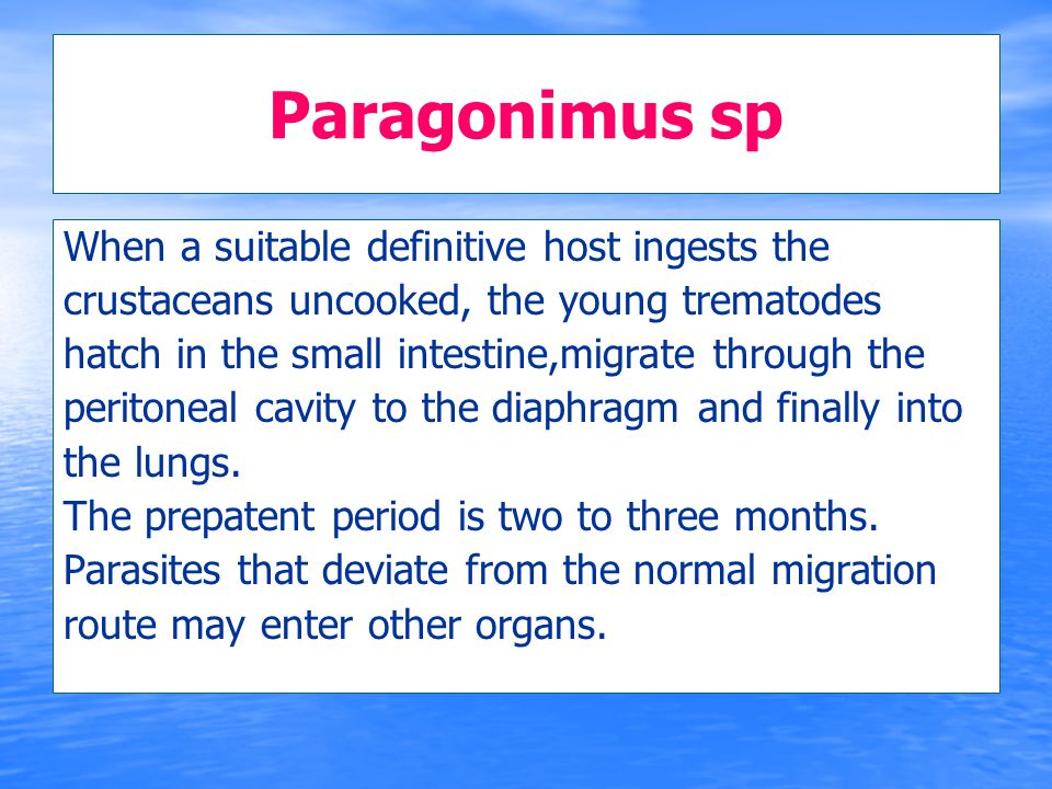 Paragonimus sp When a suitable definitive host ingests the