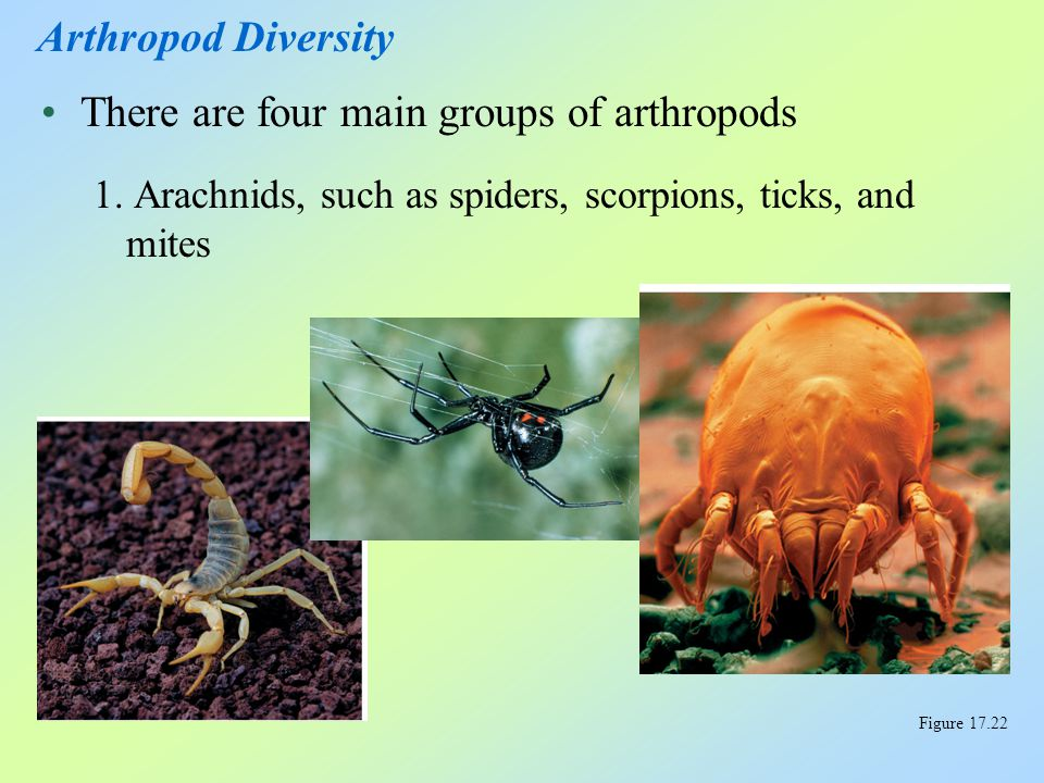 There are four main groups of arthropods