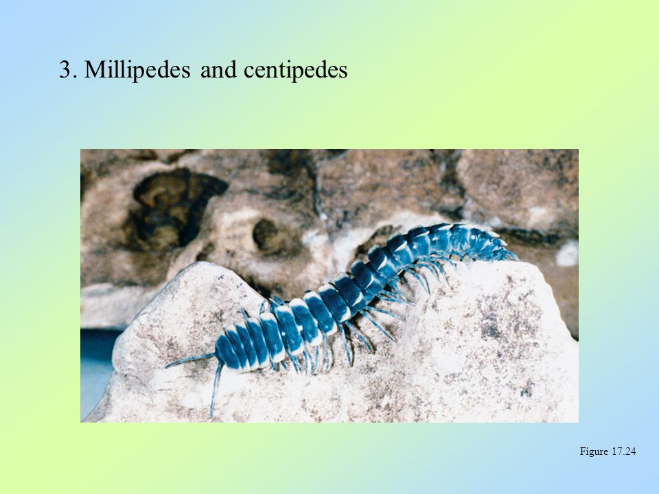 3. Millipedes and centipedes