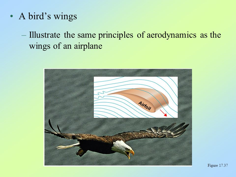 A bird's wings Illustrate the same principles of aerodynamics as the wings of an airplane. Airfoil.
