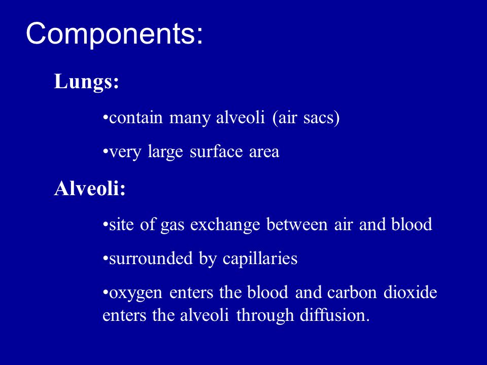 Components: Lungs: Alveoli: contain many alveoli (air sacs)