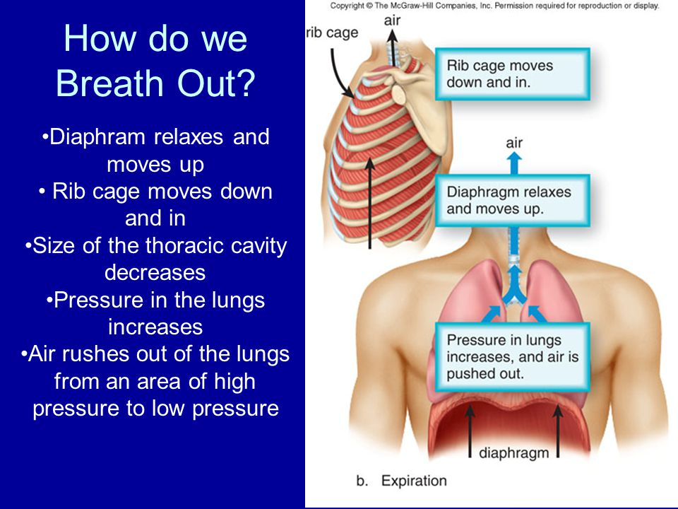 How do we Breath Out Diaphram relaxes and moves up