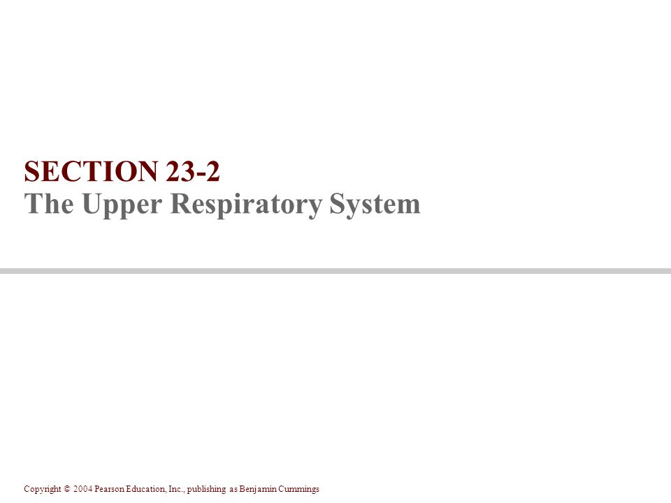 SECTION 23-2 The Upper Respiratory System