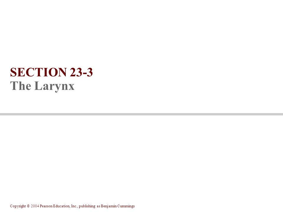 SECTION 23-3 The Larynx