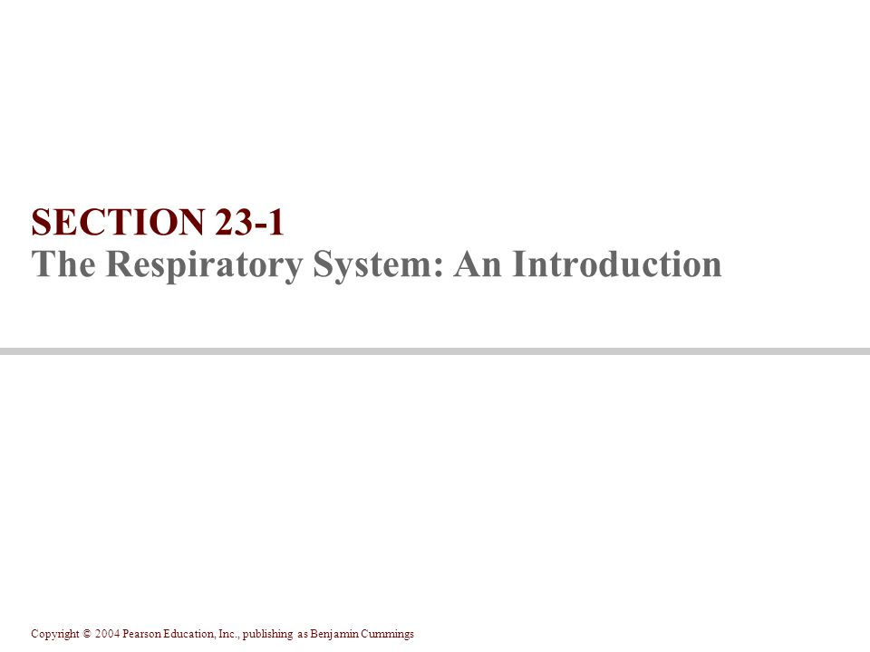 SECTION 23-1 The Respiratory System: An Introduction