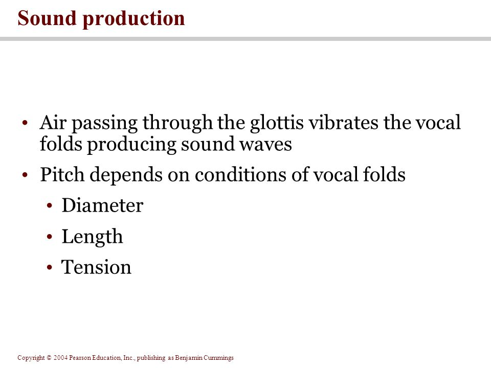 Sound production Air passing through the glottis vibrates the vocal folds producing sound waves. Pitch depends on conditions of vocal folds.