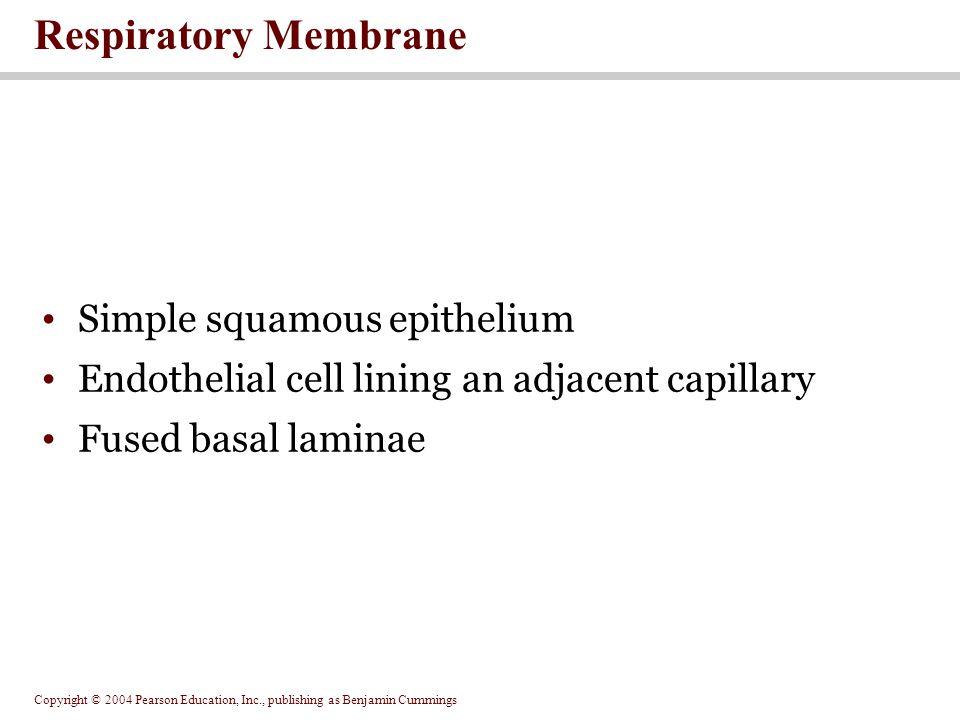 Respiratory Membrane Simple squamous epithelium