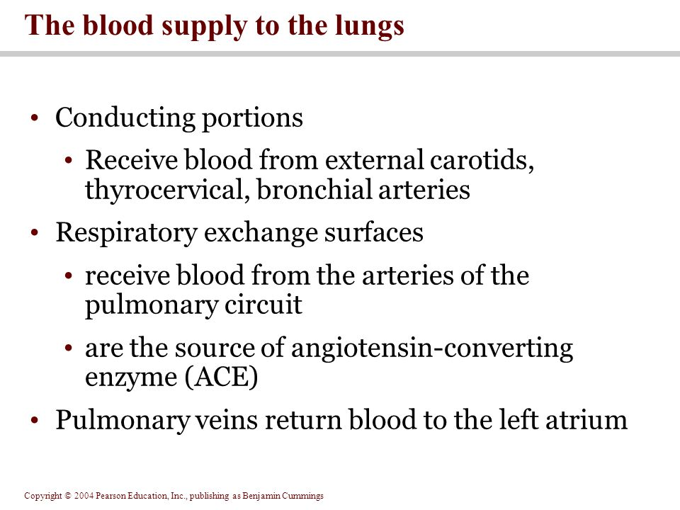 The blood supply to the lungs