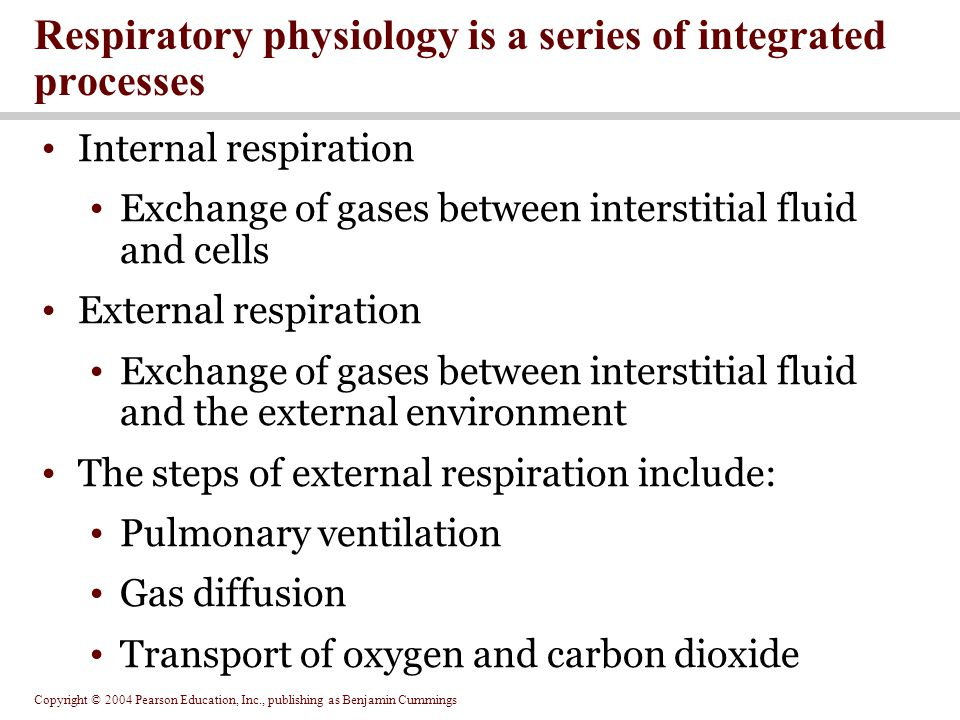 Respiratory physiology is a series of integrated processes