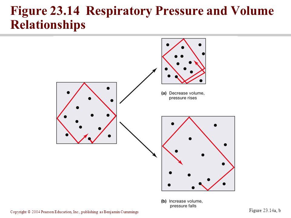 Figure 23.14 Respiratory Pressure and Volume Relationships