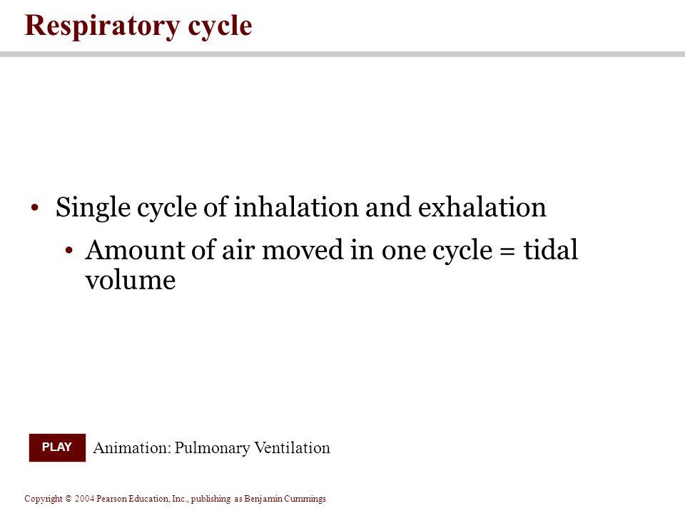 Respiratory cycle Single cycle of inhalation and exhalation