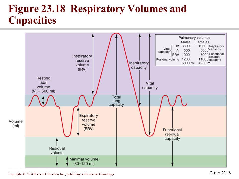 Figure 23.18 Respiratory Volumes and Capacities