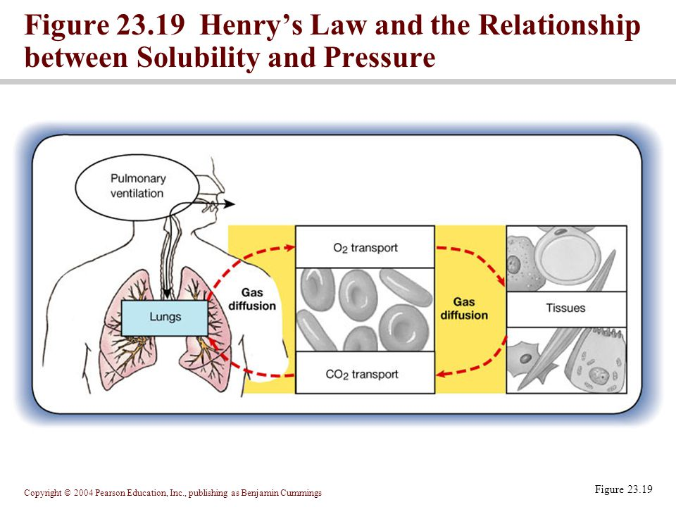 Figure 23.19 Henry's Law and the Relationship between Solubility and Pressure