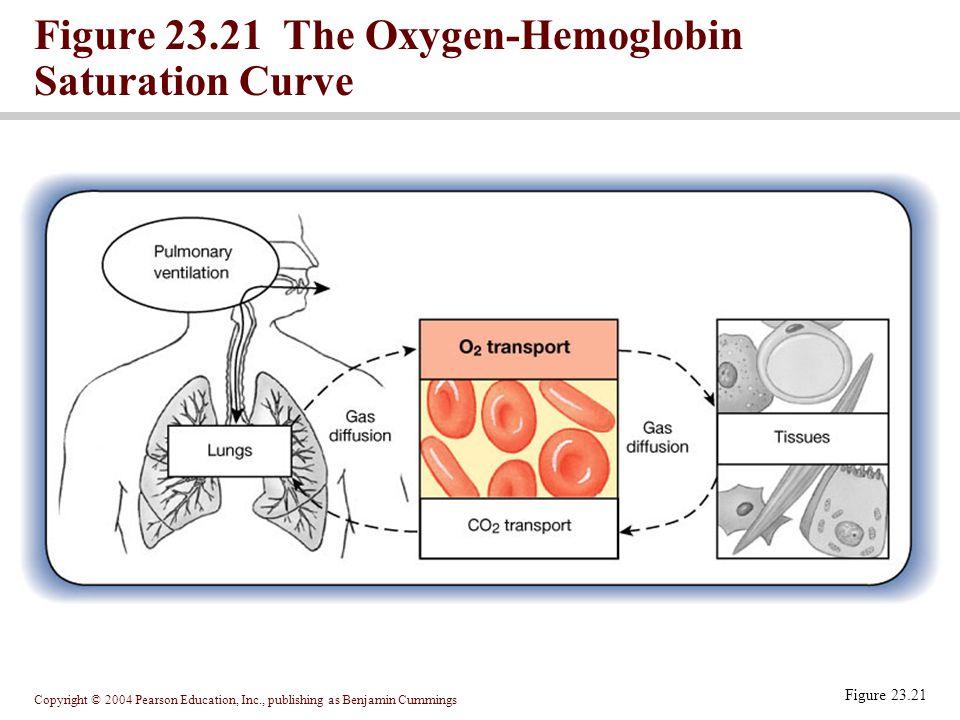 Figure 23.21 The Oxygen-Hemoglobin Saturation Curve