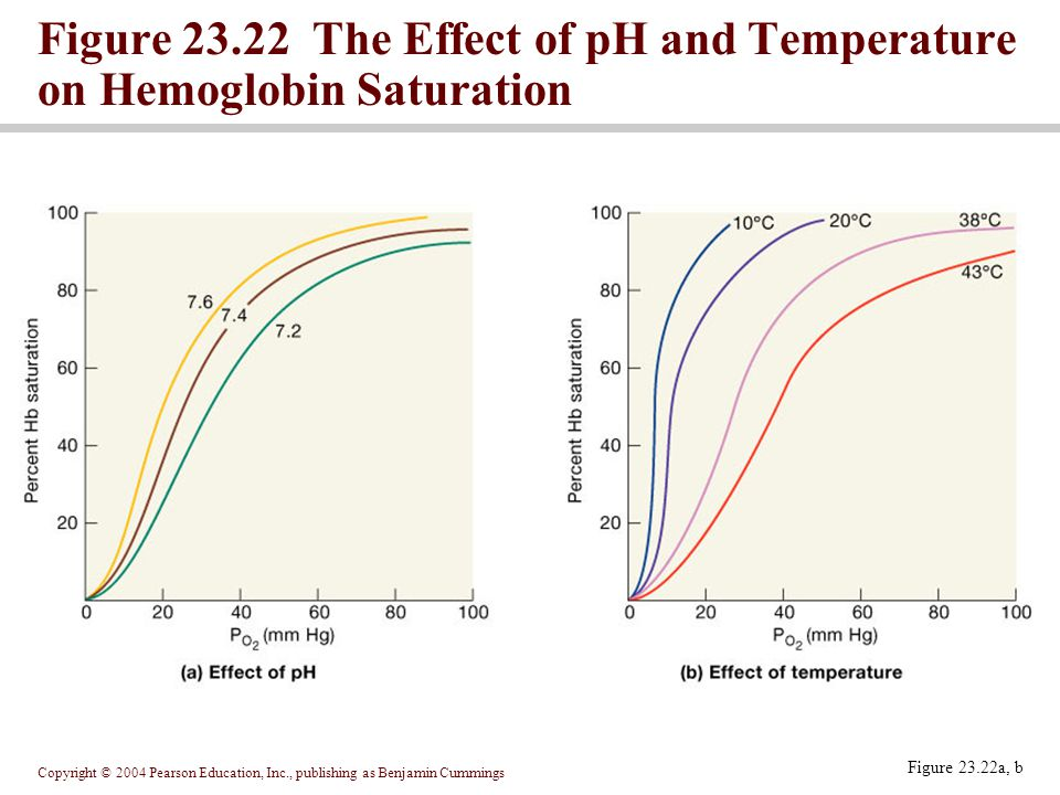 Figure 23.22 The Effect of pH and Temperature on Hemoglobin Saturation