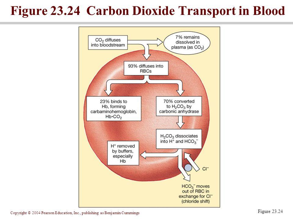 Figure 23.24 Carbon Dioxide Transport in Blood