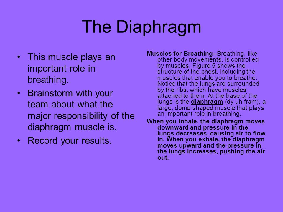The Diaphragm This muscle plays an important role in breathing.