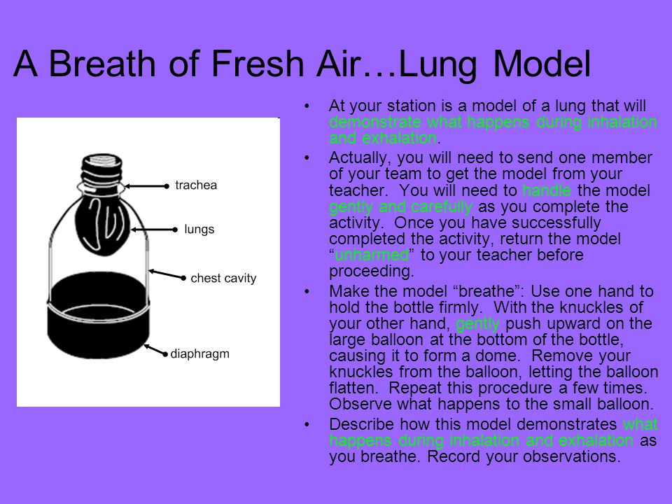 A Breath of Fresh Air…Lung Model
