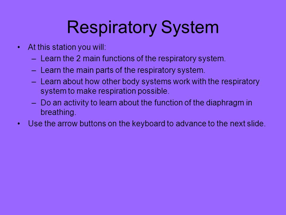 Respiratory System At this station you will:
