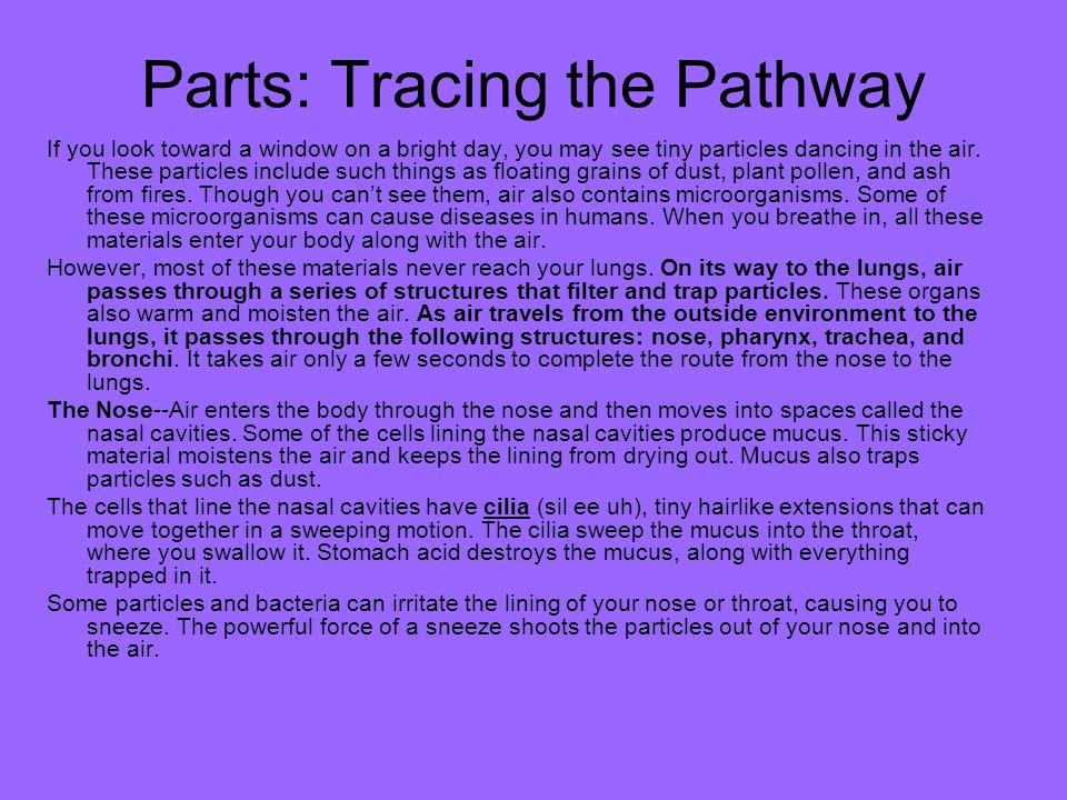 Parts: Tracing the Pathway