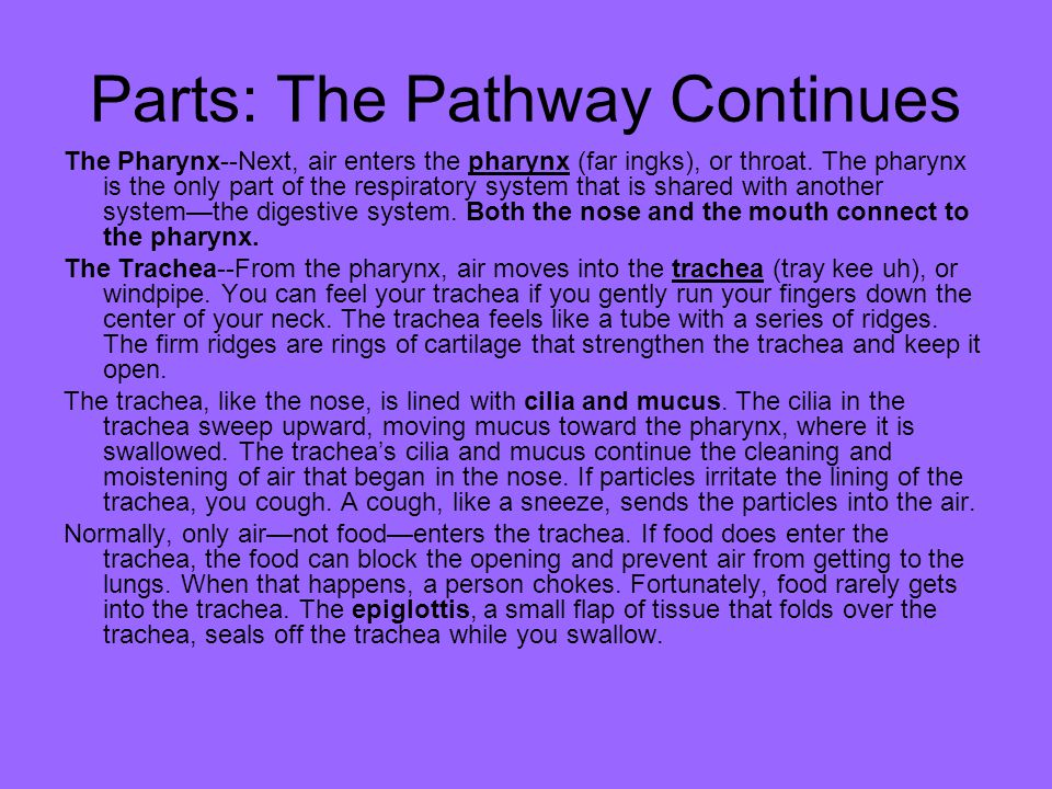 Parts: The Pathway Continues